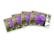 Small Photo Prints
