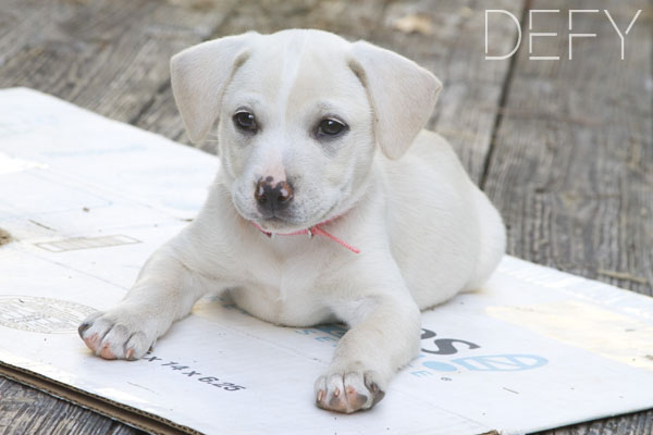 white puppy on outside deck